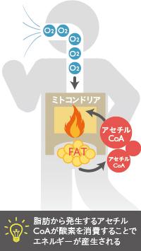 ベイザー脂肪吸引:脂肪から発生するアセチルCoAが酸素を消費し、エネルギーが産生される