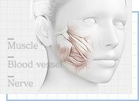 ベイザー脂肪吸引:顔の脂肪吸引で後遺症を残さないポイント