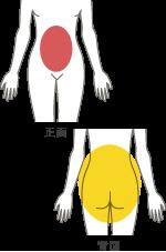 女性のボディデザイン