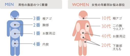 性別や年齢で違う脂肪の特性