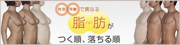 性別・年齢で異なる脂肪がつきやすい部位